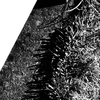OLYMPUSのコンデジ 「XZ-10」で2017年2月6日までに撮影した写真を紹介します。モノクロで枝垂れ梅や河津桜などを撮りました