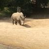 動物の名前スペイン語でなんていうの?~中・大型動物編②~