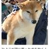 【ニュース】「もういくつ寝ると・・・ こんにちワン」(日本農業新聞)&近況報告