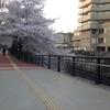 プラユキ師の「お話と瞑想の会」の下見に、桜が満開の中目黒に行ってきました