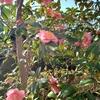 写真フォルダに「花」の写真が並ぶようになった。