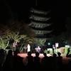 猫の真珠 山口ツアー#2 夜は瑠璃光寺・ゆらめき回廊