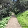 緑が映える!! | カリフォルニアのマウンテンバイク