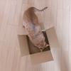箱から溢れてしまう猫さん