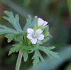 癒やされる 白い花たち