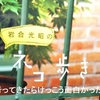 『 写真展 岩合光昭の世界ネコ歩き 』 に行ってみたらけっこう面白かった