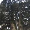 東福寺の見どころです