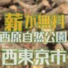 公園の間伐作業を手伝って、無料で広葉樹の原木を手に入れましょう 西東京市