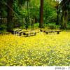 紅葉シーズンに北鎌倉行くなら東慶寺と浄智寺ハシゴできるよ!