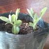 25日いいお天気・室内で種まき