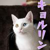 子猫くららの鳴き声はアレに似ている