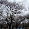 代々木公園-明治神宮