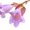 殺風景な植え込みの中で見付けた可愛い小さな花?!