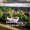 タナゴ繁殖水槽の作り方~繁殖成功率を上げる繁殖水槽を用意しよう~
