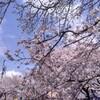 2020の桜🌸咲く