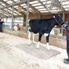 牛の身体測定