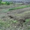 今日は、半日以上かけて家の周りの草刈りをしました。