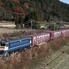 国鉄にこだわるナゲー ナゲ除け南天 岐阜近傍の汚写真