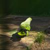 【一日一枚写真】熱帯林のやまびこ達 Part.3【一眼レフ】
