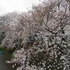神戸の穴場的な桜スポット「宇治川沿いの桜並木」