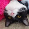 今日の黒猫モモ&黒白猫ナナの動画ー682
