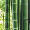 竹シーツが涼しすぎる件