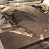 阪神地震はやはり大きかった