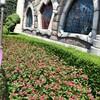 ハートの女王の花壇
