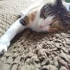 【愛猫日記】毎日アンヌさん#263