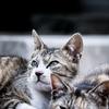 猫と暮らしてみてわかった猫に好かれる条件