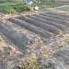 【はじめての畑】3.元肥と畝づくり