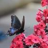 8月のストック写真5回目チョウと花