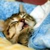 私が求める睡眠環境