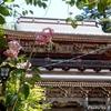 日本 華厳寺山門とユリ