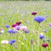 【おでかけ】世界に誇る日本の絶景!国営ひたち海浜公園ネモフィラブルー!
