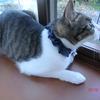 納豆の日おネコさま。