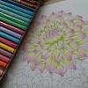 三菱No.888色鉛筆でダリアを塗ってみました・花日和花だよりより