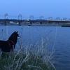夕暮れの川面を見つめて