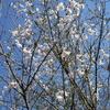 「まつこの庭」に春が来た !!