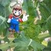 やまびこ:畑のラディッシュにお客さま「おおきなかぶ」