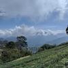 【台湾】涼みたい!癒やされたい!なら新竹県の『山上人家森林農場』が最適!