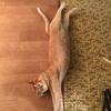 猫たちだけで長期のお留守番③:隔離部屋の労働者
