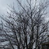 裸んぼうの木々!