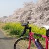 2018お花見サイクリング!~圧倒的すぎる熊谷桜堤、熊玉うどんで舌鼓