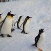 ファーストペンギンになることが成功への近道