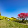 広い公園と菜の花