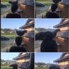 オナガドリ&ポケモンGO