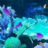 楽しかった サンシャイン水族館