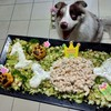 ブルマリの看板犬