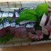 サバのお刺身、釣り人の特権!